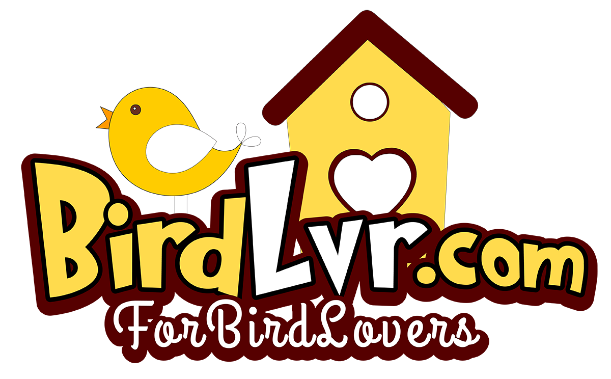 BirdLvr.com - For BIRD Lovers