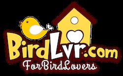 BirdLvr.com - For BIRD Lovers